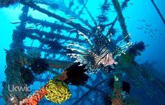 Spot the lion fish.. (www.facebook.com/sipadanresort)