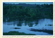 Alligators at Dusk. Paynes Prairie State Preserve.  John Moran.  Great print; it's on the wall of my office.