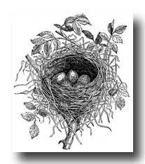 Bird Nests :: Nest of Butcher Bird printables