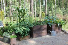 piha,laatikko,kasvilaatikko,kasvit,pihakasvit,istutus,säkkiviljelyä,vahakankaasta ja pressuista ommeltuja istutussäkkejä