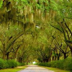 Savannah, Georgia. I LOVE TREES!!! Look at how beautiful this road is!! I would love to drive threw it!!!