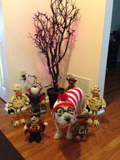 Where's Chaps? Pet Halloween Costumes, Pet Costumes, Costume Contest, Your Pet, Pets, Animals, Animales, Animaux, Animal Costumes