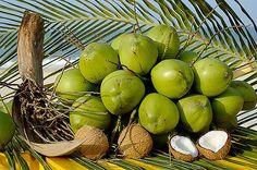 Coco - Bahia - Brazil