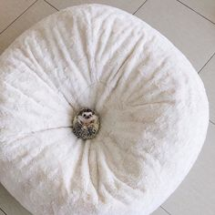 At first we thought someone put a button in the center of this #pier1 Fuzzy Bean Bag, but then we realized it was cute-as-a-button @mrstiggiewinkle_ the #hedgehog! #pier1love