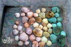 Fun Ways of Reusing Leftover Egg Dye with Kids. Make your own Rainbow Sea Shells from The Educators' Spin On It