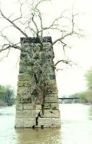 Afbeeldingsresultaat voor trees through stone