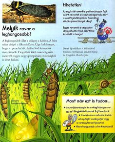 Picasa Webalbumok Environment, Comic Books, Science, Album, Bugs, Butterflies, Insects, Education, Picasa