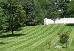 Love this grass!!