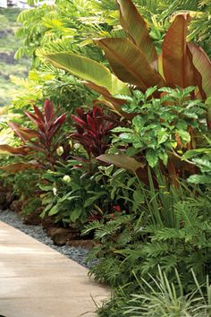 Protected by tall Macarthur Palms, anthuriums, spats and impatiens add tiny pops of color to the side walkway, rock ground cover Tropical Backyard, Backyard Plants, Tropical Gardens, Backyard Paradise, Tropical Plants, Bali Garden, Garden Trees, Tropical Landscaping, Landscaping Plants