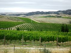 Central Otago is a place where the desert like conditions give up the finest of flavours. Vineyards in this sub-region of Bendigo, Central Otago will exhibit their own distinct characteristics.