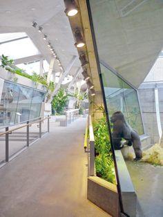 Great Ape House / Hascher Jehle Architektur