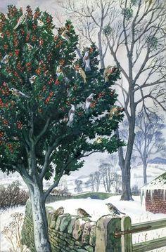 Holly tree with birds feeding. C. F. Tunnicliffe