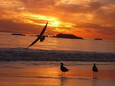 """Résultat de recherche d'images pour """"coucher du soleil"""""""