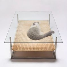 cat bed and low table