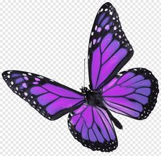 Showing Gallery For Real Purple Butterfly Butterflies Purple Butterfly Tattoo, Butterfly Background, Butterfly Clip Art, Butterfly Drawing, Cute Butterfly, Butterfly Painting, Butterfly Watercolor, Butterfly Wings, Watercolor Tattoos