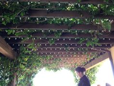 Lights and vines on pergola