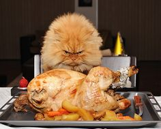 Kitteh is not amused by your suggestion that dinner is not all for him