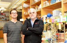 Scientists have announced the development of the first stable semisynthetic organism.