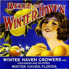 Winter Haven Florida Belle Winter Haven 1 Orange Citrus Fruit Crate Label Print | eBay
