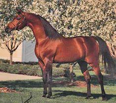 Arabian stallion Aladdinn dies at 35 | Horsetalk - International horse news  http://www.horsetalk.co.nz/news/2010/02/045.shtml
