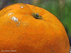 Orange Photograph Still Life Photos Food by SuePetriPhotos on Etsy, $30.00