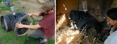 Stimulating broody behavior in a hen ~ Love this blog... so much good info.
