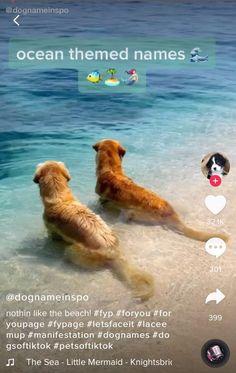 Super Cute Puppies, Cute Baby Dogs, Cute Little Puppies, Cute Funny Dogs, Super Cute Animals, Cute Little Animals, Cute Funny Animals, Funny Dog Names, Cute Animal Names