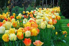 rot-gelb-blau.blog: Garten