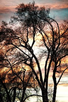 ✮ Colorful Silhouetted Trees