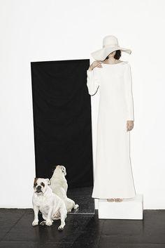 high fashion bull dog