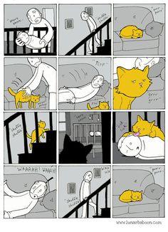 El gato es más listo que tú. #humor #risa #graciosas #chistosas #divertidas