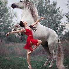 """A truly beautiful photo of ballet royalty and equine excellence. Principal dance… A truly beautiful photo of ballet royalty and equine excellence. Principal dancer Anastasia Limenko with the extraordinary Andalusian horse """"Brioso"""" Photo ©. Cute Horses, Pretty Horses, Horse Love, Beautiful Horses, Animals Beautiful, Ballet Beautiful, Horse Girl Photography, Dance Photography, Animal Photography"""