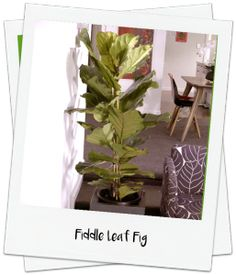 How to style houseplants in your home video - Palmers Garden Centre http://www.palmers.co.nz/secrets-garden-success/style-your-home-with-on-trend-houseplants/
