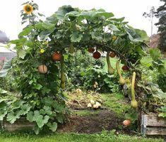 Potager Garden, Veg Garden, Vegetable Garden Design, Garden Trellis, Edible Garden, Garden Art, Garden Tools, Farm Gardens, Outdoor Gardens
