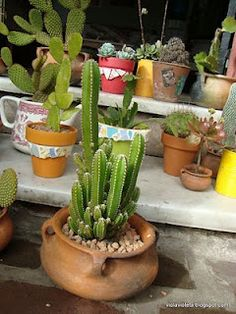Tienda DecoCactus cactus crasas suculentas macetas de cemento cerámica banquetas romanas: Cactus en la decoración