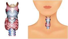 Nutrition & santé : Illustration Description Thyroid Diet – What Foods To Eat And Avoid For Hypothyroidism Thyroid Disease Symptoms, Hypothyroidism Diet, Thyroid Diet, Thyroid Health, Thyroid Gland, Thyroid Cure, Thyroid Supplements, Thyroid Issues, Thyroid Hormone
