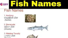 Different kinds of fish in english – A Selection of Pins about Animals Animals Name In English, Goldfish Types, Fish Chart, Oscar Fish, Homer Alaska, Aglio Olio, Animal Worksheets, Fish Stock, Pet Fish