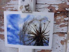 Pusteblume, Planet, Oberammergau, 2011  Abzug einer Originalfotografie, Format 13x18 mit weißem Rand
