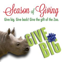 Support wildlife around the world with gifts we guarantee won't stay in the box! From behind-the-scenes adventures to Gift Memberships to animal sponsorships, our gift guide has something for everyone.