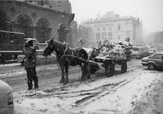 Snowy Dublin 1982 outside Olympia theatre Dame st opp city hall. Circus Train, Shakespeare Festival, Research Images, Great Shots, Olympia, Dublin, The Outsiders, Elephant, Horses