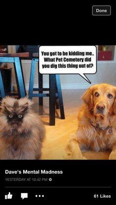 Freaky cat!!