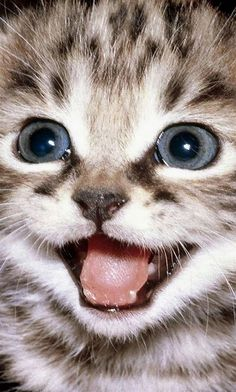 See this cute Kitty & about 2,000 additional ones at: www.PinterestBob.com