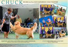 Show dogs from world! Exposições pelo mundo! Canil Pedra de Guaratiba - Terrier Brasileiro e Beagle! Web site: http://www.canilpguaratiba.com Facebook: http://pt-br.facebook/canilpedradeguaratiba Instagram: http://instagram.com/canilpguaratiba