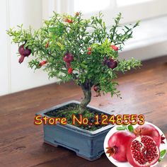 20pcs/ bag, bonsai pomegranate seeds, very sweet Delicious fruit seeds,succulents Tree seeds, bonsai plant for home