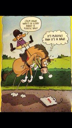 Horsing Around In L. Humour - Horses Funny - Funny Horse Meme - - Horsing Around In L. Humour The post Horsing Around In L. Humour appeared first on Gag Dad. Funny Horse Memes, Funny Horse Pictures, Funny Horses, Cute Horses, Pretty Horses, Horse Love, Horse Humor, Cowboy Humor, Horse Riding Quotes