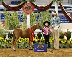 Colbie with Vanity Grove Farms Ruby Prima Donna 2011 AMHR Nationals