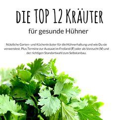 Die Top 12 Kräuter für Hühner. Gesunde Gartenkräuter und Blumen für den eigenen Garten. Wann man sie aussäen kann und wie sie in der Hühnerhaltung eingesetzt werden.