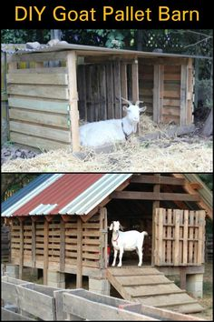 In Need of an Animal Shelter or Shed? Keep it Simple by Building One From Old Pallets
