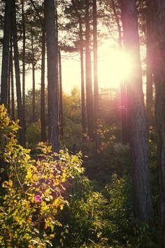 Autumn sun Photo by Jorinde Reijnierse Sunny Pictures, Sun Photo, Tree Forest, Trees, Autumn, Artist, Nature, Photography, Painting