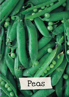 Want to learn more about peas? Sign up for Jamie Oliver's Kitchen Garden Project at http://www.jamieskitchengarden.org/!